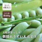 wakayamamarche_usuiendou-1k