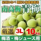 青梅(南高梅)梅酒・梅ジュース用 10kg 〔3Lサイズ〕 朝採り厳選 和歌山県みなべ産 【送料無料】