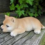 犬の置物 柴犬 いねむり豆柴 106QY いぬ イヌ 動物 オーナメント ガーデン インテリア 雑貨 置物 庭 ガーデンマスコット 雑貨小物 ディスプ