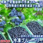 産地直送 冷凍ブルーベリー 約1kg 山形県産 JA庄内たがわ管内 羽黒地区産 完熟の果実を凍らせた抜群の栄養と美味しさ!