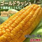 とうもろこし ゴールドラッシュ中心 10〜16本 約5kg 千葉県産中心 大房厳選 生で食べられる高糖度トウモロコシ!