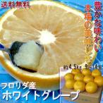 『グレープフルーツ ホワイト』