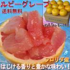 グレープ フルーツ ルビー 赤肉 アメリカ フロリダ産又はアフリカ産 果物  約4.5kg 10玉前後