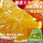 樹上完熟ネーブル 和歌山県産 7〜12玉 約2.5kg 秀品 化粧箱入り 贈答品 実測糖度15度超!樹成り熟成で更に味わい豊かになったネーブルオレンジ!