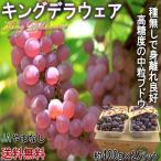 温室キングデラウェア 種無し葡萄 2パック 約800g 秀品 山梨県産 JA 贈答品 高い糖度と食べやすさの中粒ブドウ!