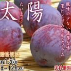 太陽 プラム 約1.5kg 8〜12玉 山梨県産 贈答規格 JAフルーツ山梨 ギフトに人気のすももをお届け!濃厚な甘さの果物