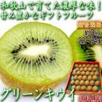 キウイフルーツ 約3kg 22〜33玉 和歌山県産 贈答規格 JA紀の里 濃厚な甘酸っぱさと豊富な栄養!