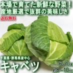 キャベツ 約8〜10kg 6〜10玉 群馬・千葉県産中心 旬の産地を厳選!様々なお料理に使える抜群の美味しさ
