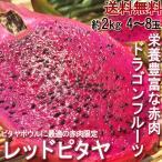 ドラゴンフルーツ ピタヤ 赤肉 4〜8玉 S〜Lサイ...