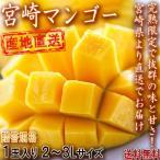産地直送 宮崎マンゴー 樹上完熟 1玉 2〜3Lサイズ 贈答規格 宮崎県産 とろける食感と濃厚な甘さ!直送で抜群の味と鮮度のギフト果物