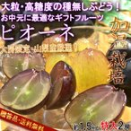 温室ピオーネ 特大サイズ 種無し葡萄 約1.5kg 2房 贈答規格 山梨県産 ギフト最適な大房・大粒の高糖度ブドウ!
