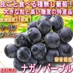 ナガノパープル 種無し葡萄 約1.2kg 2〜3房 長野県産 贈答規格 大房限定 JA共撰品 特産品の高級フルーツ!皮ごと食べる大粒の黒ぶどう