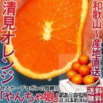 産地直送 清見オレンジ 和歌山 約10kg 訳あり 家庭用 タンゴール類 柑橘類 みかん類