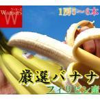 バナナ フィリピン 箱 5〜6本6セット お試し