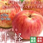 産地直送 葉取らず津軽 林檎 約10kg 28〜40玉 赤特規格 青森県産 贈答品 りんごの中で2番目に出荷量の多い「つがる」! 硬い果肉に溢れる甘み