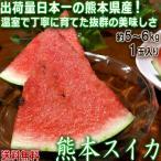 スイカ 熊本産 5〜6kg 1玉入り すいか ハウス栽培 西瓜の生産量日本一の熊本産!温室で丁寧に育てた抜群の味