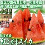 温室こだまスイカ 約7〜8kg 4〜10玉 熊本県産 贈答規格 西瓜の生産量日本一の大産地、熊本産!甘さと食感の美味しい冬すいか