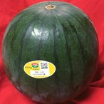 夢黒小玉 スイカ 熊本県産 JA鹿本 4〜5Lサイズ 2玉入り 約6kg 優品規格 共撰品 産地箱入り 贈答可能 高い糖度とシャリ感豊かなブランドすいか こだま西瓜