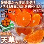 産地直送 みかん 天草オレンジ あまくさ 5kg 愛媛県産 訳あり品 果汁豊富でとろける食感!抜群の鮮度と濃厚な甘さ