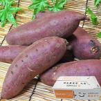 紅まさり さつまいも 約10kg 茨城県産 JAなめがた 訳あり品 キュアリング貯蔵 しっとりした食感と上品な甘さ!