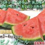ピノ・ガール 小玉スイカ 約4〜5kg 2�