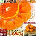 不知火 しらぬい 約2.5kg 7玉〜12玉 熊本県産 露地栽培 光センサー認証 本場で育てた濃厚な甘酸っぱさ!デコポンと同品種のタンゴール