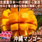 産地直送 沖縄マンゴー 約2kg 4〜8玉 沖縄県産 訳あり品 個人農家産 南国の日差しで抜群の味!日本一の出荷量を誇る本場の美味しさ