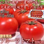 フルーツトマト 約3kg 18〜28玉 茨城県産 贈答規格 小玉限定 トマトの本場で育てた甘み豊かな国産野菜! 糖度センサー選別