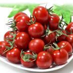 奏 かなで トマト プチトマト 約1kg S〜Lサイズ 東京都産 高い糖度と濃厚な味わいの風味豊かなミニトマト!