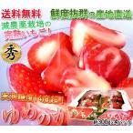 産地直送 ゆめのか いちご 長崎産 約300g×4パック 計1.2kg 完熟イチゴ 産地箱入り 安心の減農薬栽培