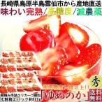 産地直送 ゆめのか いちご 長崎産 化粧箱2箱 計約900g ゆりかーご 新型いちご容器入り 完熟イチゴ 安心の減農薬栽培