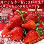 産地直送 ゆめのか 完熟いちご 約900g 長崎県産 贈答規格 イチゴ専用化粧箱「ゆりかーご」使用 お歳暮に最適なギフト苺!
