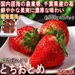 とちおとめ いちご 約300g×4パック 千葉県産 秀品 JAちばみどり 贈答規格 全国有数の農業県で厳選した高品質なギフト苺!鮮やかな果実に濃厚な味