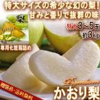 かおり梨 Premium 約3kg 3〜5玉 大玉限定 贈答規格 千葉県産 希少品種 ギフト最適な特大・高品質!香りと甘さ溢れる抜群の美味しさ