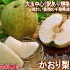 かおり梨 約5kg 4〜16玉前後 訳あり品 千葉県産 家庭用 生産量の少ない幻の梨!爽やかな甘い香りと優秀な味わい