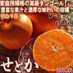 せとか 約2.5kg M〜4Lサイズ 佐賀 愛媛 愛知 産地厳選  訳あり お試し品 サイズ指定不可 簡易包装 柑橘類 タンゴール種