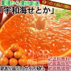 産地直送 せとか 訳あり 約5kg S〜Lサイズ 愛媛県産 西宇和が誇る本場の味わい!鮮度抜群の高級柑橘をサイズ混合・家庭用特価でお届け
