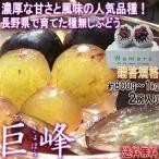 巨峰 種無しぶどう 2房入り 約800g〜1kg  長野県産 贈答規格 葡萄の大産地で育てた旬の味!濃厚な甘さと爽やかな風味
