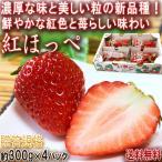 紅ほっぺ いちご 約300g×4パック 茨城県産 贈答規格 鮮やかな粒に濃厚な味のギフト苺!甘み豊かでジューシーなフルーツ