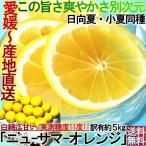 産地直送 日向夏 ニューサマーオレンジ 約5kg 愛媛県産 訳あり家庭用 糖度実測11度以上 白皮ごと食べるオレンジ!
