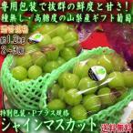 シャインマスカット Pプラス規格 種無し白ぶどう 約1.2kg 2〜3房 山梨県産 贈答規格 専用包装で抜群の鮮度と高糖度!ギフト最適な葡萄