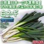 ネギ 白葱 約5kg 30〜45本 千葉県産 JAちば ねぎの出荷量日本一の大産地!栽培適地で育てた旬の野菜をお届け