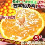 愛媛 みかん 5kg 産地直送 西宇和の雫 柑橘 温州ミカン :蜜柑 3つの太陽マルチシート栽培