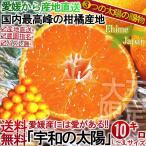産地直送 みかん 愛媛 10kg 宇和の太陽 訳あり品ではございません 大玉狙い L〜3L 柑橘 温州ミカン :蜜柑 3つの太陽 とりたて完熟蜜柑