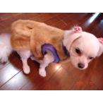 小型犬用毛皮のコート(ウィゼル)3号サイズ