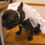 Yahoo!犬洋服のお店わんわんくろざぁーず犬のウエディングドレス、ヴェール、リードのセット【ウエディングドレス】愛犬との結婚式や前撮に♪ペットのドレス/ブライダルグッズ/犬 ウエディングドレス