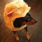 犬のコスチューム【ライオン】ペット用コスチューム/ハロウィン仮装/犬服/犬の洋服/