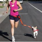Yahoo!和湘堂ヤフーショップ【PETLIFE ペットライフ】犬用腰ベルト付き引きひも アウトドア ナイロン製 ジョギングやトレッキング、ウォーキング用リード 「901-0039」