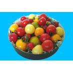 【ミディトマト】Color Tomato Collection