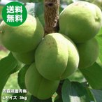 Other - 青梅 3kg 梅酒 豊後梅 L